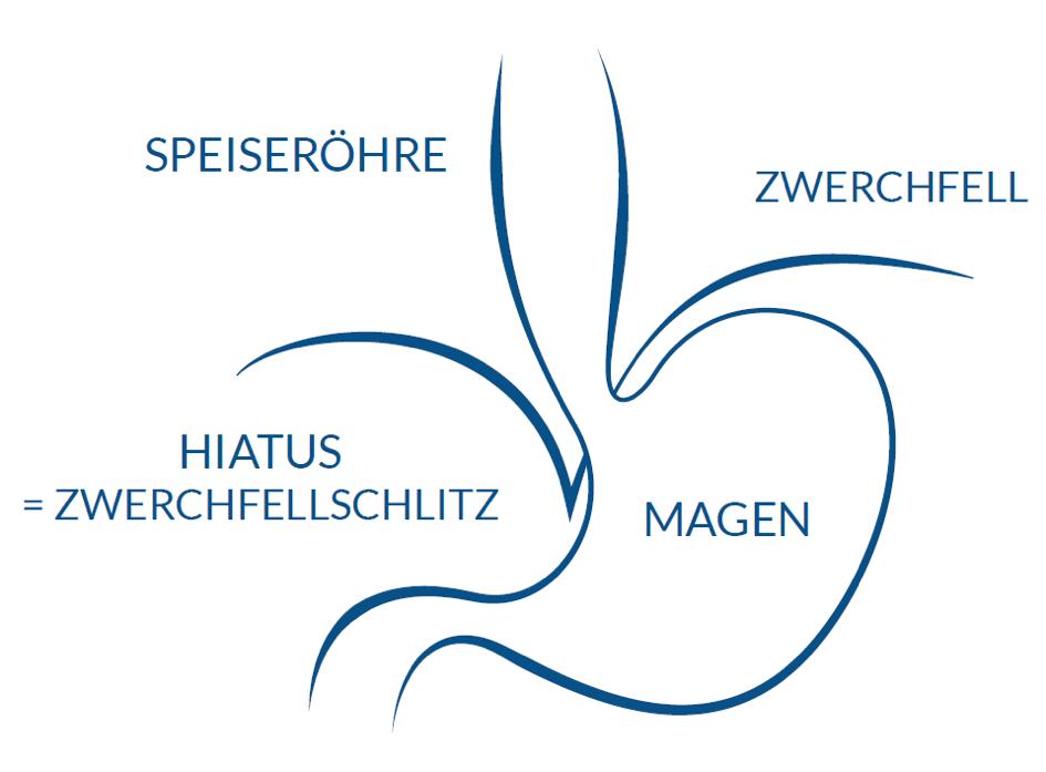 Normale Anatomie und Physiologie - Antireflux.info
